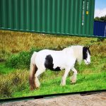 New 20ft x 8ft Storage Container Tack Room With Horse Logo Panel